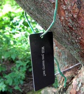 "PHOTO: A tree tag labeled, ""Will you marry me?"""