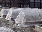 winter_coldframes