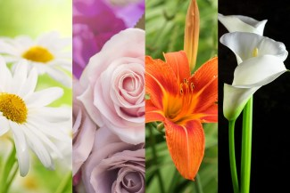 Daisy, rose, tiger lily, and cala lily: what your favorite flower says about you