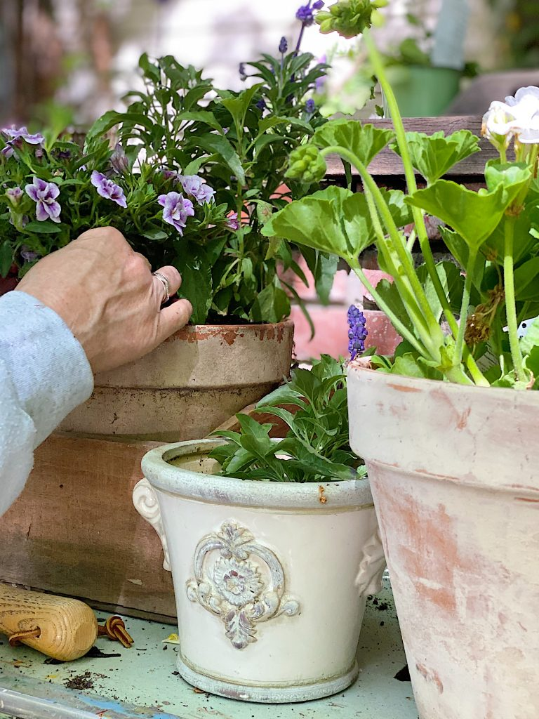 Planting Pots on the Potting Bench