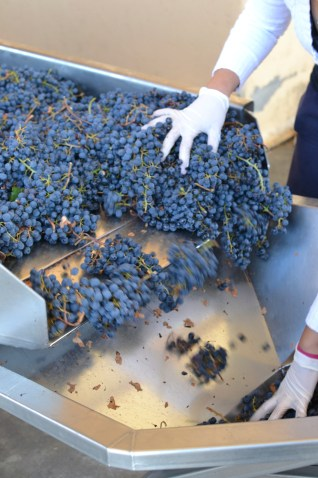 Grapes in Argentina