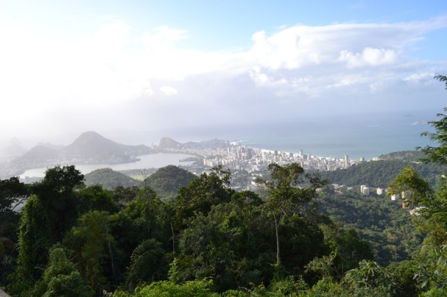 view from rainforest
