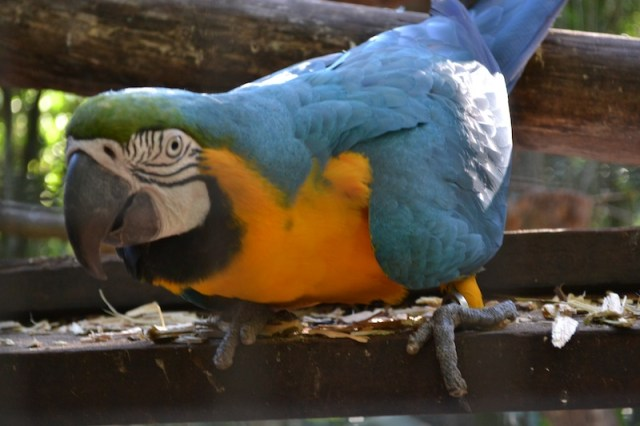 aves parque blue bird