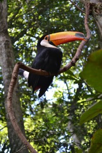 aves parque toucan