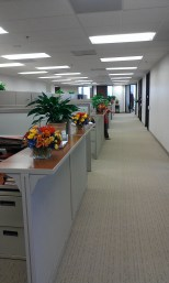 Overall look of the long corridor alongside cubicles. Flowers make it festive and elegant.
