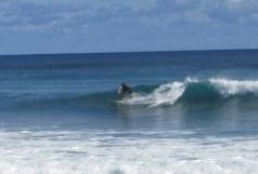 Garbanzos_Surf_11-24-13_22