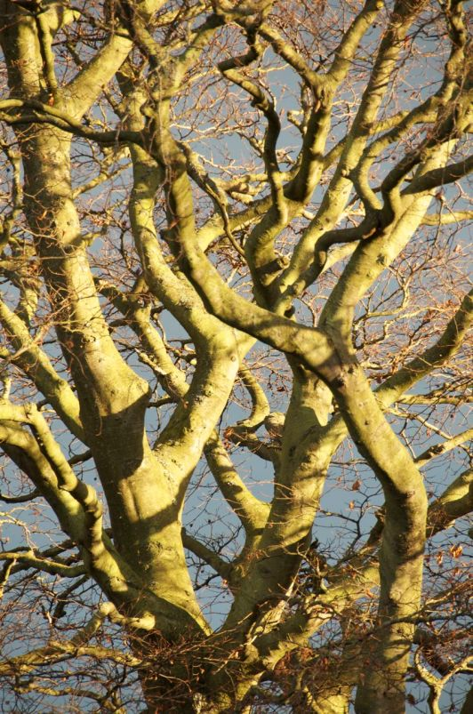 December 2014: trunk catches the light.