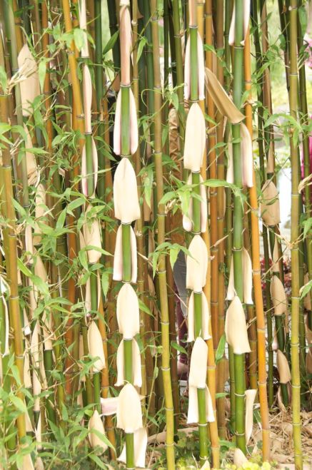 Interesting bamboo can be found in the Japanese garden.