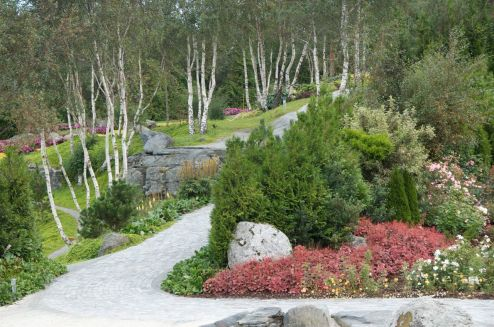 Silver birches are used throughout the garden