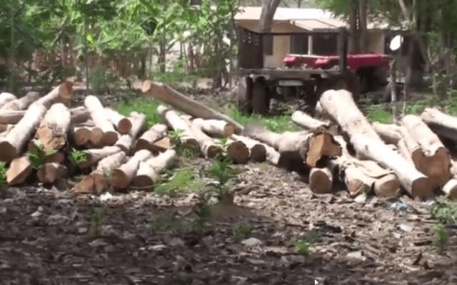 Logs of timber in the forest