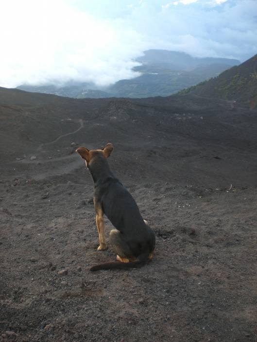 Pacaya dog