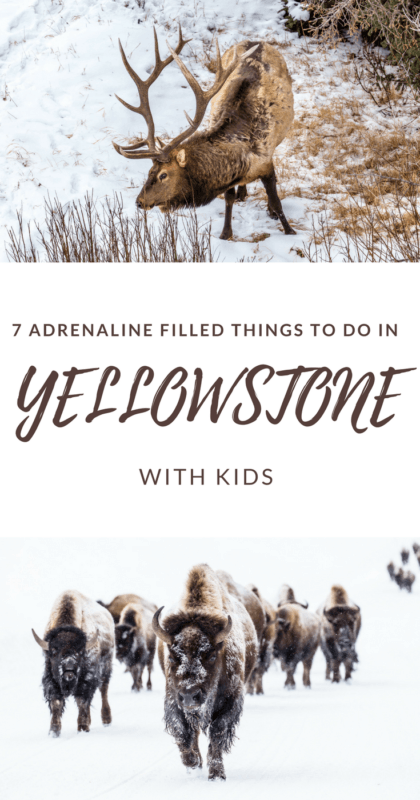 Discover all the things to do in Yellowstone (with kids) - via @clautavani