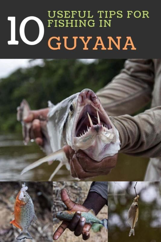 Guyana, in South America, is a country that has a lot to offer to its visitors. One of the best things to do there is fishing. Find out ten tips to do it successfully | #guyana #southamerica via @clautavani