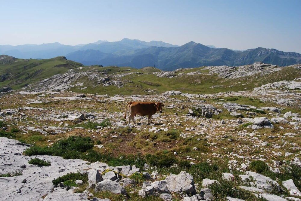 Hiking The Picos De Europa: The Best Trails