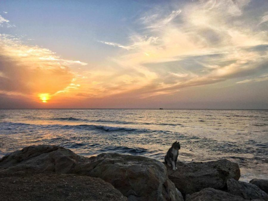 Where To Stay In Tel Aviv: The Best Accommodation Options By Area And Interests
