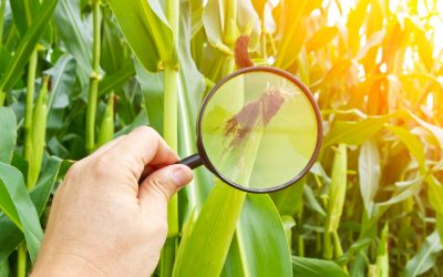 Debunking the Myths About Crop Insurance