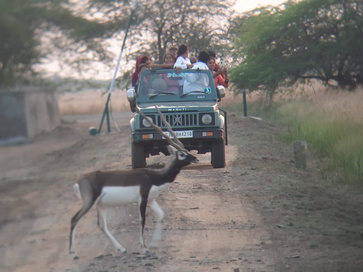 Jeep Safari in Velavadar