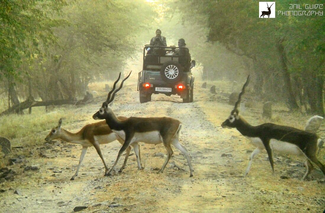 jeep safari at velavadar