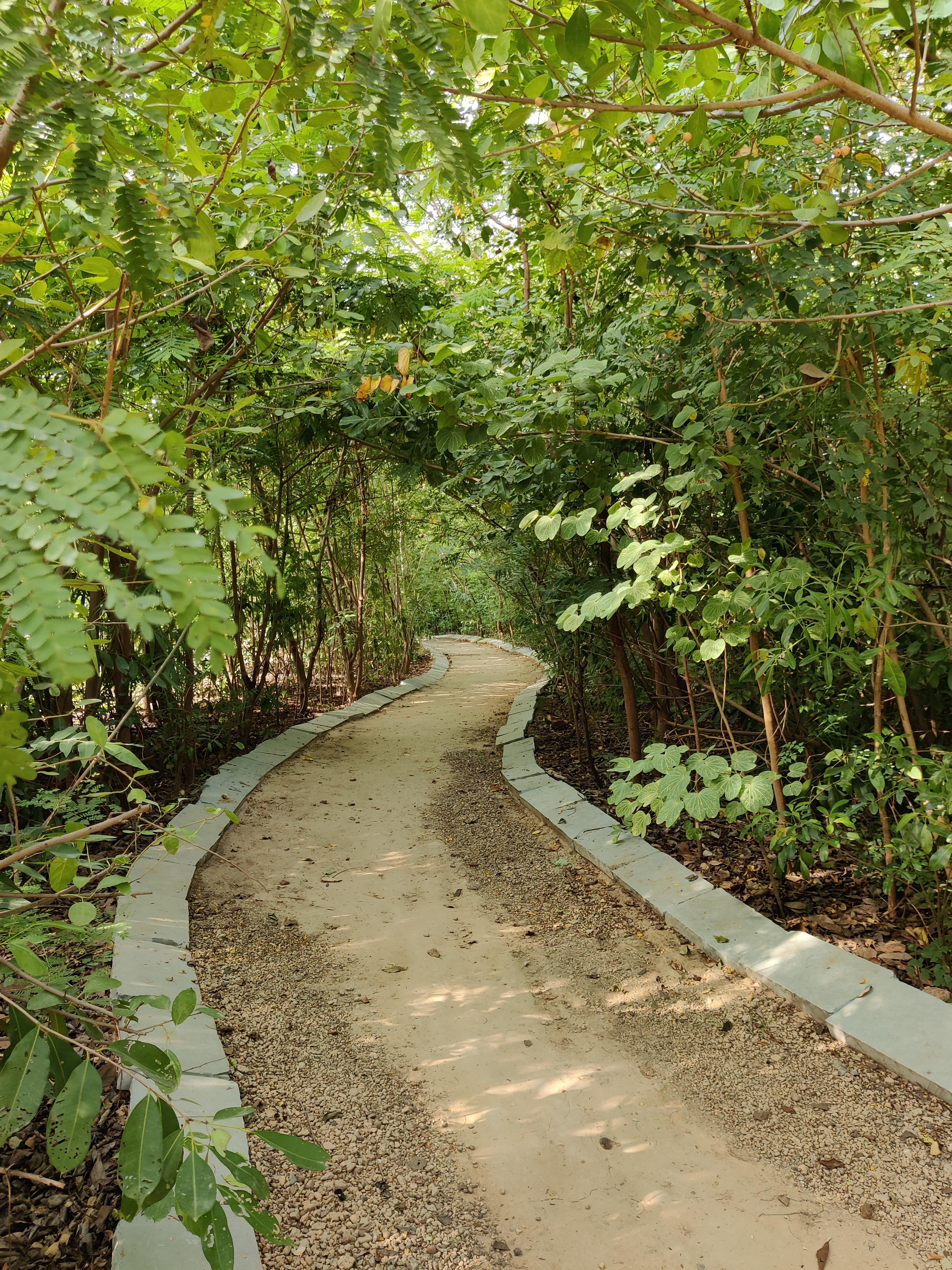 Walk way in oxygen park