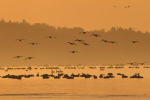Hundreds of thousands of migratory birds, including the endangered Siberian crane, gathering for the winter at Poyang, China's largest freshwater lake, in Jiangxi Province. Credit Visual China Group, via Getty Images