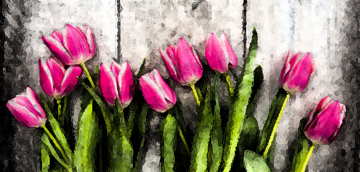 pink fresh tulips flowers on gray wooden background