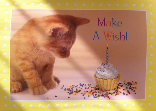 Kitten card from Shirley