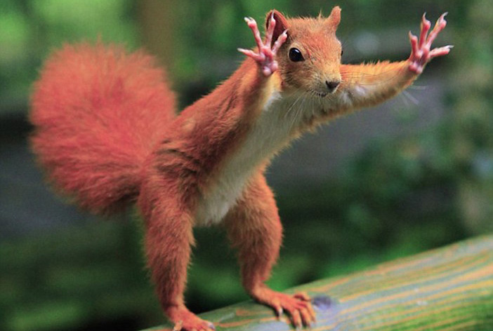 Stop going squirrely cropped