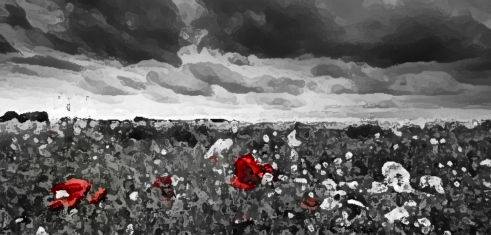 13874960 - poppies in a field in black and white