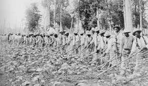 The convict leasing system