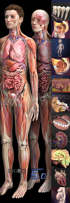 Organ Systems of the Human Body