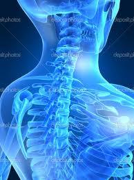 skeletal 3