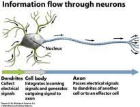 Nerve flow