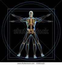 stock-photo-body-and-skeleton-in-vitruvian-man-d-render-63001420