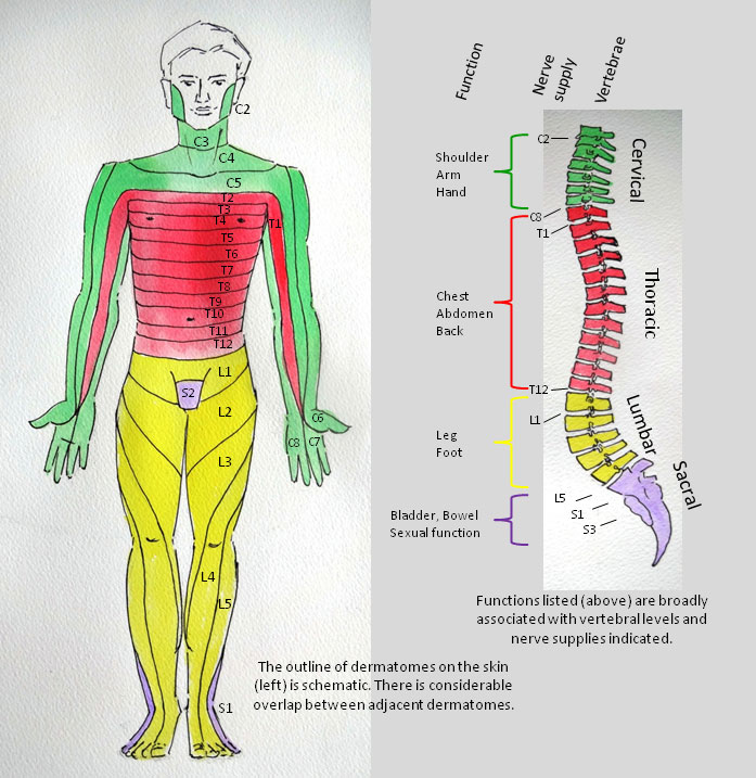 inspire_spinal_cord