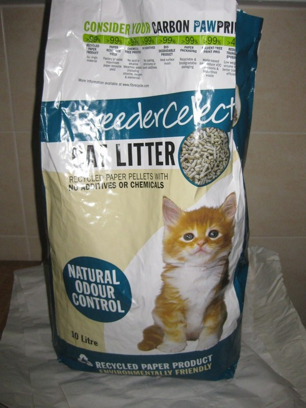 Cat Stayed In Litter Box