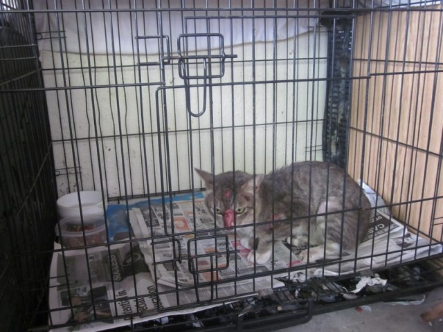 mini-Houdini in his old home