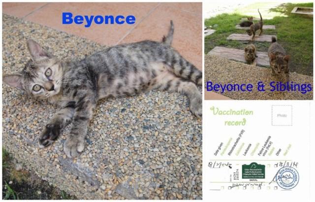 mini-Beyonce's Pic Collage