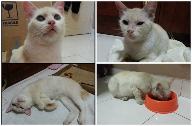 mini-snowbell pic1