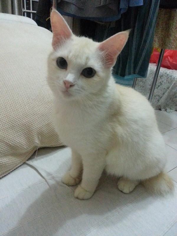 mini-Snowbell