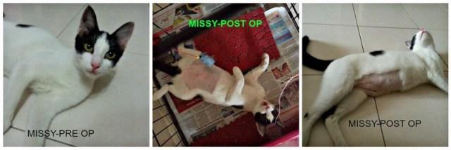 mini-MISSY-PRE & POST PICTURES
