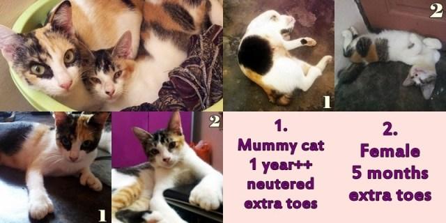mini-cats
