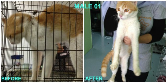 Male 01 Neutered
