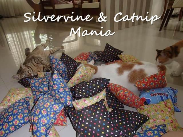 Silvervine & Catnip Mania