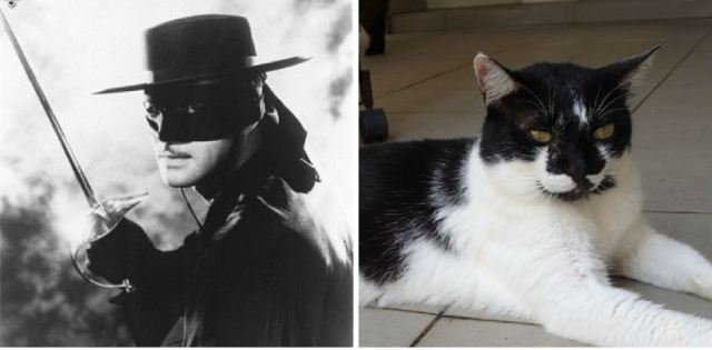 indy and zorro