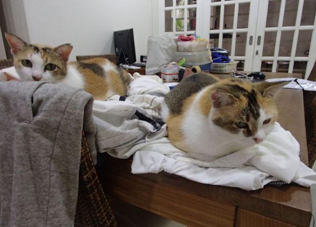 laundry-duty
