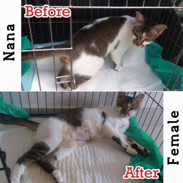Neutering Aid For 3 Cats In Puncak Jalil Nor Aini Bt Abd
