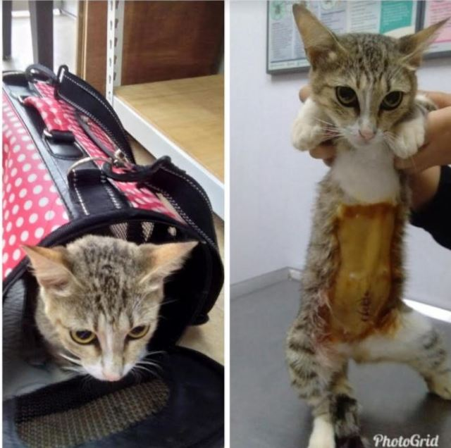 Neutering Aid For 2 Cats In Kuantan (Salmiah Bt Mat Arof's)