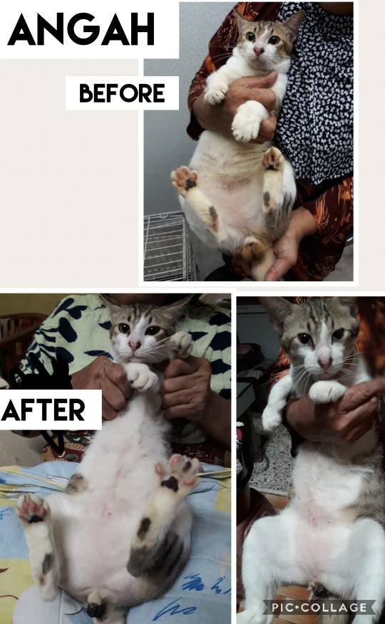 Neutering Aid For 3 Cats In Sungai Petani (Azizah Bt Man's)