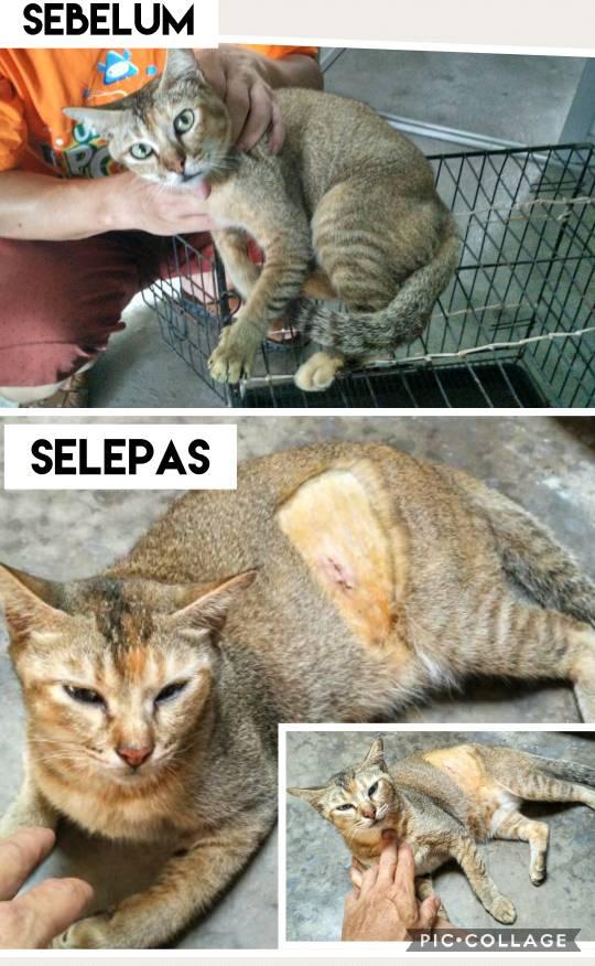 Neutering Aid For 2 Cats In Sungai Petani (Teh Kuang Hawk's)