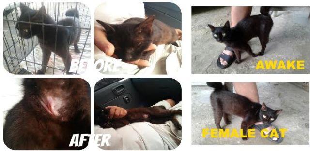Neutering Aid For 1 Cat In Miri (Koo Kian Min's)